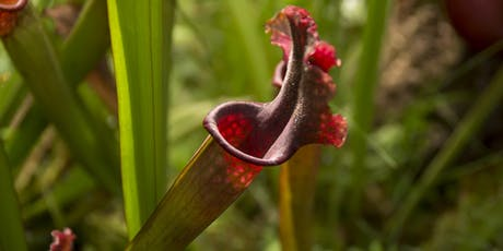 Masterclass: The fascinating world of Carnivorous Plants. Saturday 26 October 2019 tickets