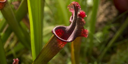 Masterclass: The fascinating world of Carnivorous Plants. Saturday 26 October 2019