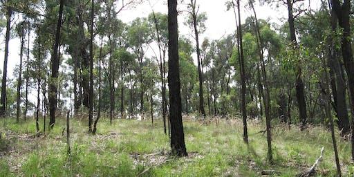 Bunjil Reserve Entrance Renewal Planting