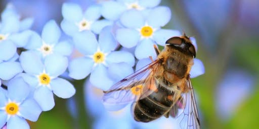 Environment Centers Sustainable Seminar Series – Pollinators