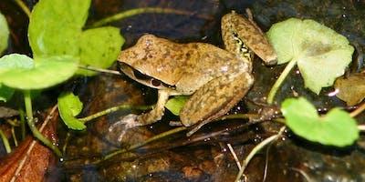 Night adventures: Karawatha - Frogs of the Night