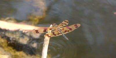 Bush Explorers, 'Spring into Nature' Bug hunt - Noorumba Reserve