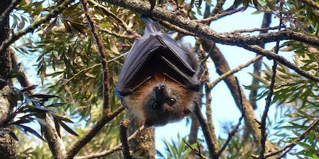 Bush Explorers 'Spring into Nature' - A Night with the Bats- Milton Park tickets