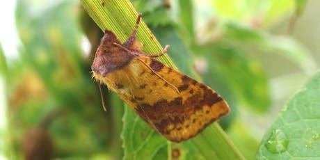 Moth Watch tickets