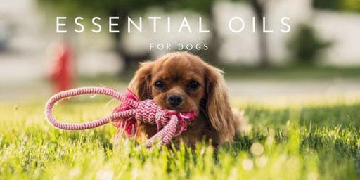 Doggie Swim and Scan with doTERRA essential oils