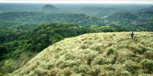 IFcinéma : Il était une forêt