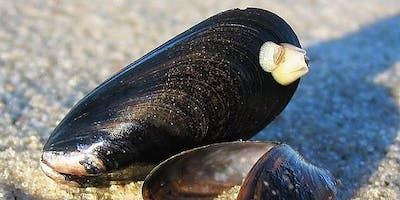 "NEAMO- ""Setting the stage for mussel research in the North Atlantic region\"""