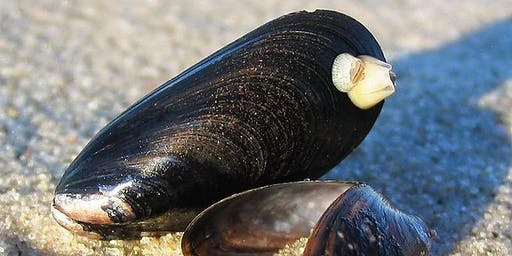 "NEAMO- ""Setting the stage for mussel research in the North Atlantic region"""