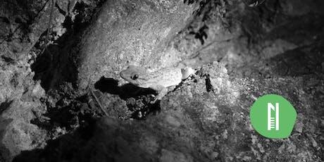 Explorer en 60 min · Les geckos de Grenoble billets