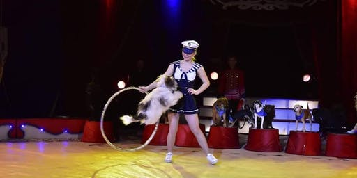Circus Gerbola in Maynooth 2019