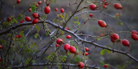 Foraging Workshop - Rose Hips and Haws tickets