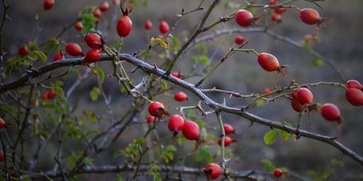 Foraging Workshop - Rose Hips and Haws