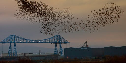 RSPB Saltholme Soup and Starlings