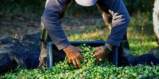 Séance gratuite d'information pour préparer au mieux la récolte de vos olives