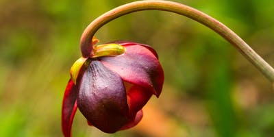 Northumbrian Botany - Wednesday