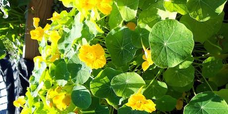 Flower Power - Growing Outdoor Flowers in Florida  tickets