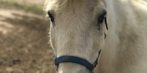 Farm Open Pony Party