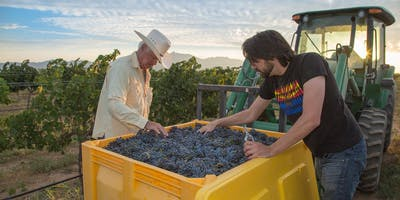Wine Society Harvest Day