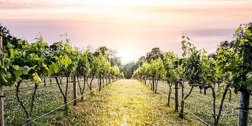 A Night at the Vineyard