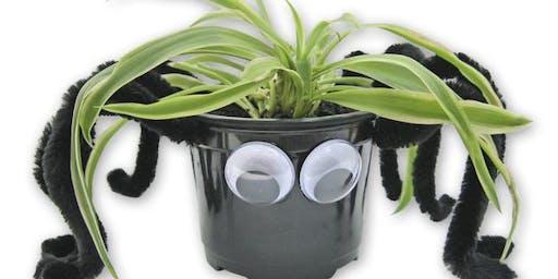 Kid's Spider Plant  Activity