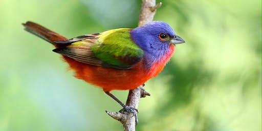 Bird-watching in City Park