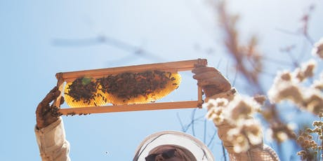 Honey Bees and Houseplants by The Sill x Hilary Kearney tickets