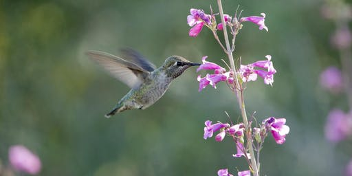 Bling on the Wing: 12 Months of Flowers for Hummingbirds