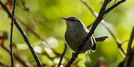 Birding Walk-About - CANCELLED tickets
