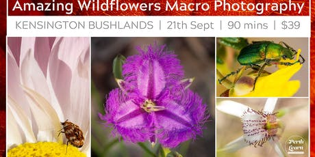 Amazing Wildflowers & Insect Macro Photography tickets