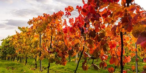 Harvest Dinner at Bolney Wine Estate