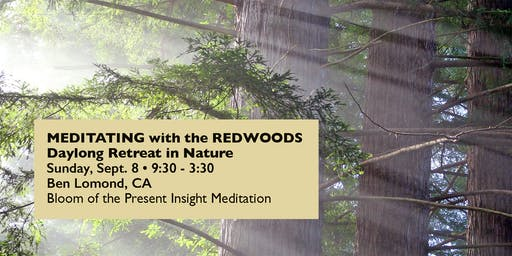 Meditating with the Redwoods