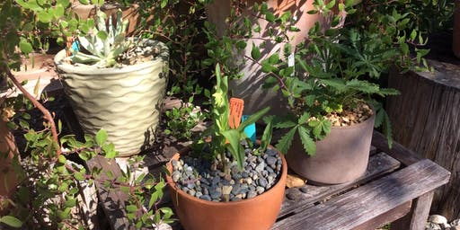 Cool Container Plants, a Walk and Talk with Flora Ito