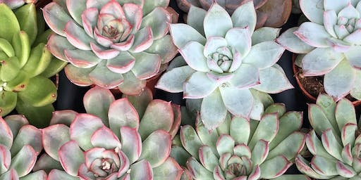 Wine Down Wednesday Succulent Terrarium Workshop at Annata Wine Bar