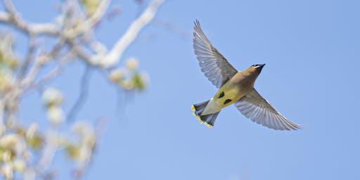 Birding Photography Workshop at Kensington Metro Park