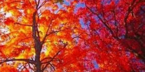 Autumnal Yoga and Mindfulness Retreat
