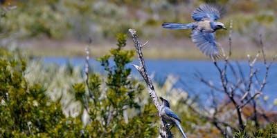 Jonathan Dickinson State Park (Wildflowers & Scrub-Jays) Fri Mar 13 2020