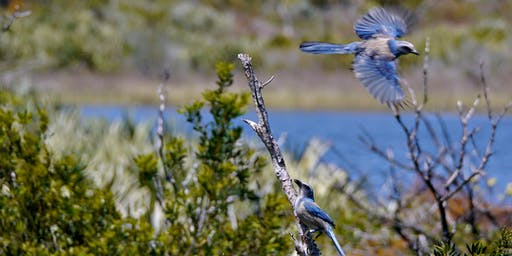 Jonathan Dickinson State Park (Wildflowers & Scrub-Jays) Fri Mar 13 2020