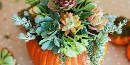 Succulent Pumpkin Workshop at Heart Beet Kitchen