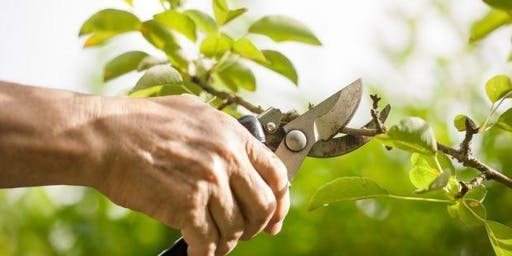 Pruning Trees and Shrubs with Alice Siebecker