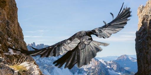 Dream Circle: Animal Guardians and Spiritual Guides