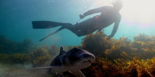 Jervis Bay Shark Week Snorkeling Tours
