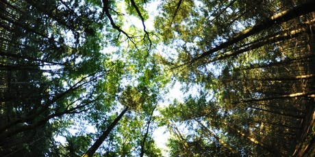 Root To Rise: Forest Bathing and Nature Based Mindfulness tickets