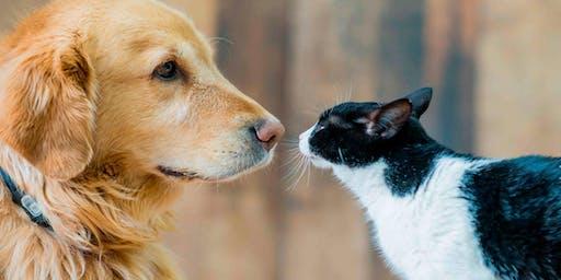 Charla Gratuita: El lenguaje de nuestras mascotas