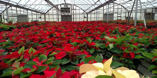 FREE Poinsettia Tours at BFG - Over 6,000 Plants!