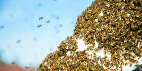 November - Beginning Beekeeping Class at The Bee Store - Inspections tickets