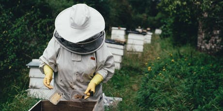 December - Beginning Beekeeping Class -  Anatomy and Colony Dynamics tickets
