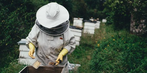 December - Beginning Beekeeping Class -  Anatomy and Colony Dynamics