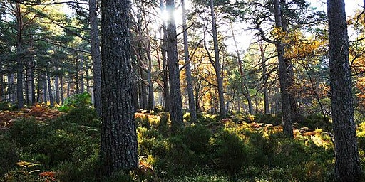 Ecological Fieldtrip - Black Woods of Rannoch