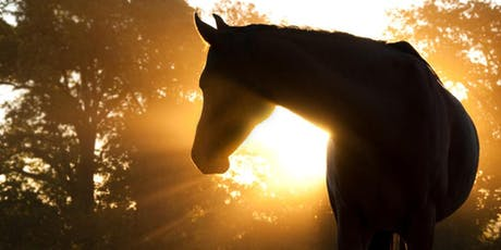 Refresh - Horses and Essential Oils at Sunset  tickets