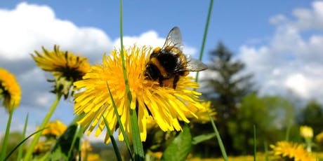 How to Attract Pollinators to Your Garden or Farm tickets